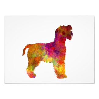 Welsh Terrier in watercolor Photographic Print
