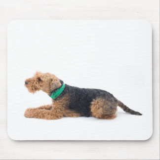 Welsh Terrier Mouse Pad