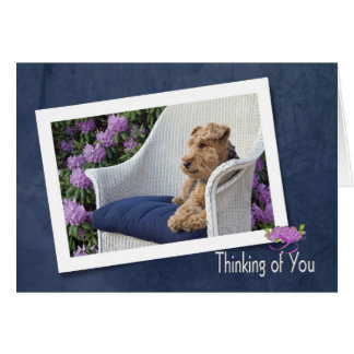 Welsh Terrier thinking of you Card