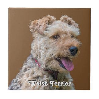 Welsh Terrier Tile