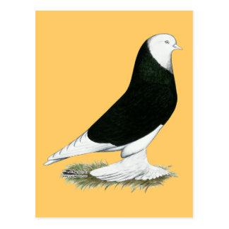 West Black Bald Pigeon Postcard