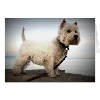 West Highland Terrier Card