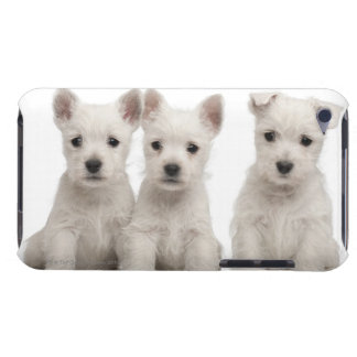 West Highland Terrier puppies (7 weeks old) iPod Case-Mate Cases
