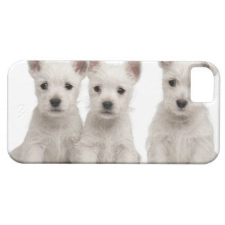 West Highland Terrier puppies (7 weeks old) Case For The iPhone 5