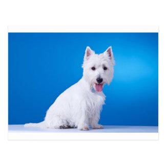 West Highland White Puppy Dog Post Card