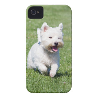 West Highland White Terrier, westie dog cute photo iPhone 4 Cases