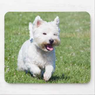 West Highland White Terrier, westie dog cute photo Mouse Pad