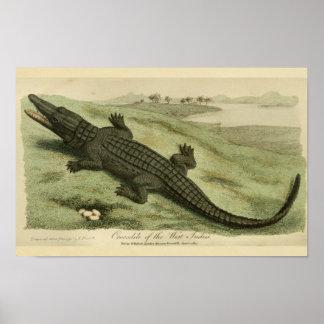 West Indies Crocodile Natural History Print