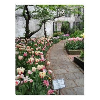 West Side Community Garden Tulip New York City NYC Postcard