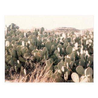 West Texas Cactus Postcard