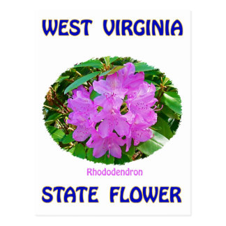 West Virginia State Flower T-Shirts & Gifts Postcard
