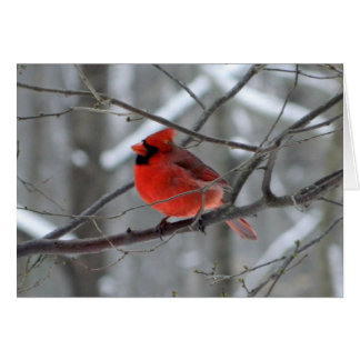 WestCreek Red Cardinal (Blank) Card