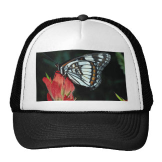 Western admiral on red Indian paintbrush flower Hat