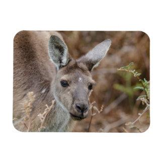 Western Australia, Perth, Yanchep National Park Magnet