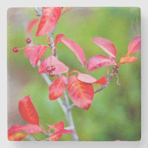Western Choke Cherry (Prunus Virginiana) In Fall Stone Coaster
