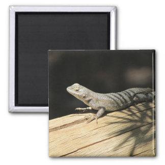 Western Fence Lizard Photo Magnet