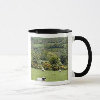 Western Ireland, Dingle Peninsula, broad Mug