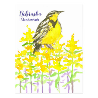 Western Meadowlark Bird Goldenrod Nebraska Postcard
