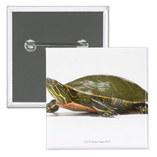 Western painted turtle Chrysemys picta bellii Pinback Buttons