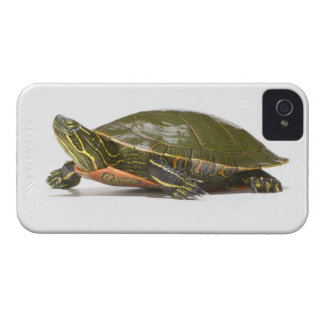 Western painted turtle (Chrysemys picta bellii), iPhone 4 Case-Mate Case