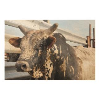 Western rodeo bucking bull wood print