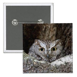 Western Screech Owl Buttons