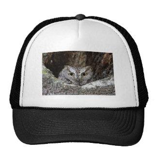 Western Screech Owl Cap