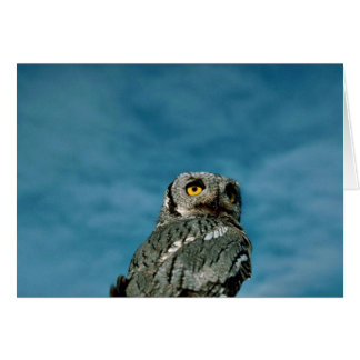 Western screech owl cards