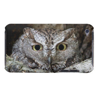 Western Screech Owl Barely There iPod Covers