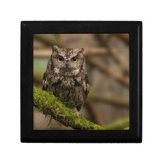 Western Screech Owl Gift Box