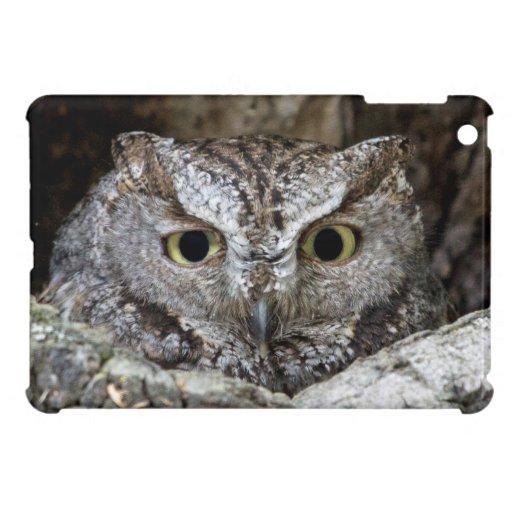 Western Screech Owl iPad Mini Case