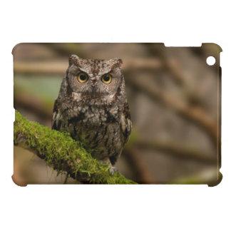 Western Screech Owl iPad Mini Cases