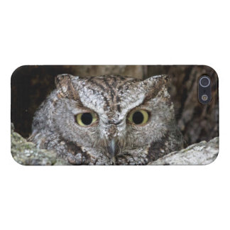 Western Screech Owl Cases For iPhone 5