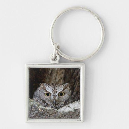 Western Screech Owl Key Chains
