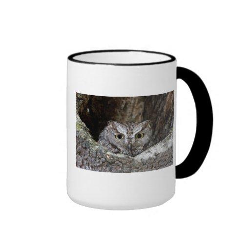 Western Screech Owl Mug