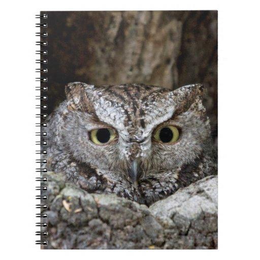 Western Screech Owl Spiral Note Book