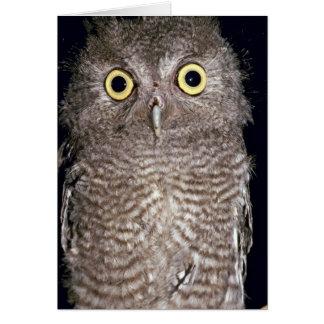 Western screech owl, Otus kennicottii, California, Cards