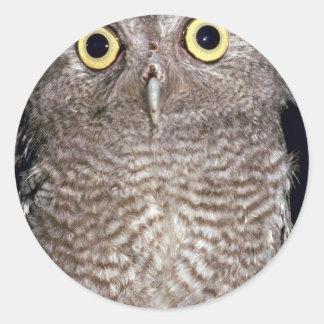 Western screech owl, Otus kennicottii, California, Sticker