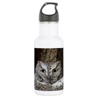 Western Screech Owl 532 Ml Water Bottle