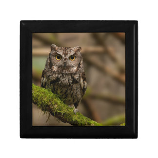 Western Screech Owl Small Square Gift Box