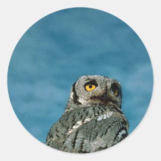 Western screech owl sticker