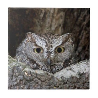 Western Screech Owl Small Square Tile