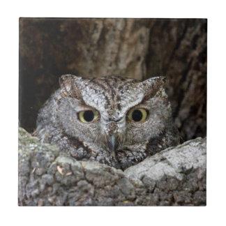 Western Screech Owl Tiles