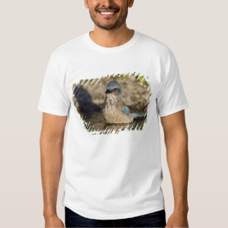 Western Scrub-Jay, Aphelocoma californica, T Shirts