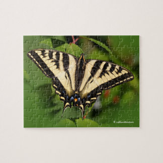 Western Tiger Swallowtail Butterfly on Fuchsia Puzzle