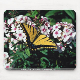 Western tiger swallowtail on white phlox top mouse pads