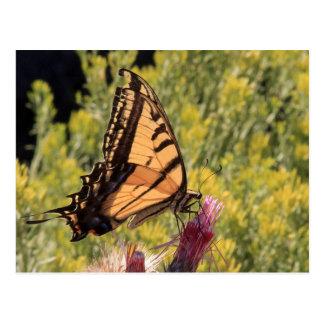 Western tiger swallowtail postcard
