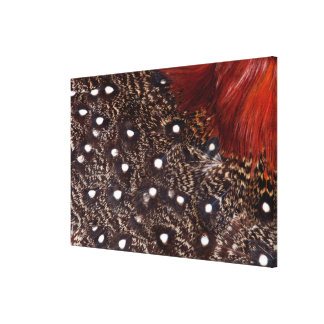 Western Tragopan Feather Design Canvas Print