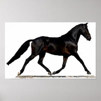 Westfalen Dressage Horse Poster Print