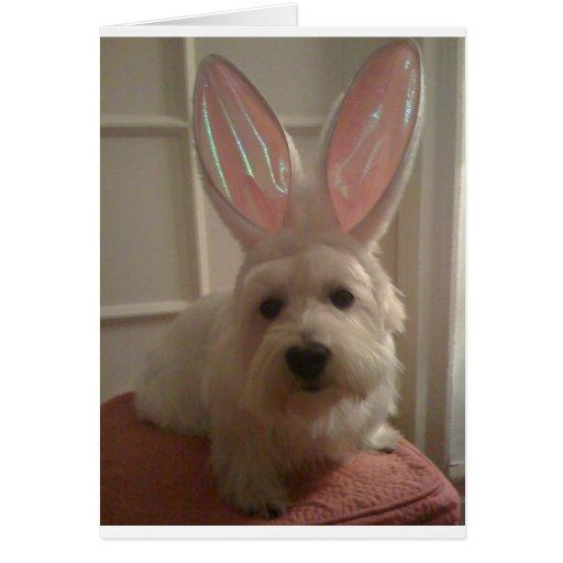 Westhighland Bunny Cards